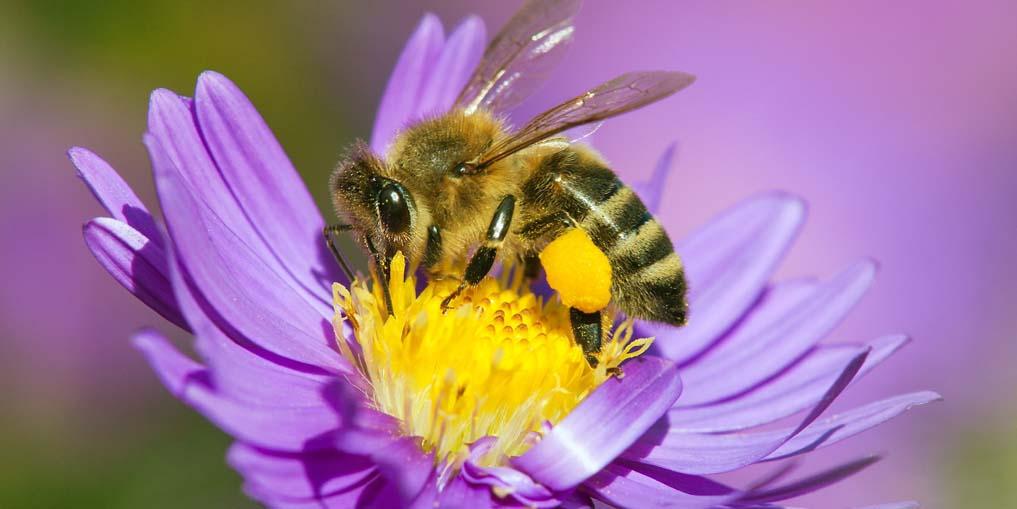 Garten und Balkon bienenfreundlich gestalten