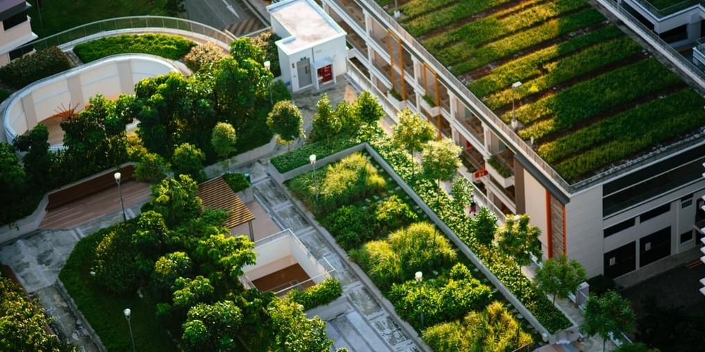 urban-gardening_1017x508.jpg